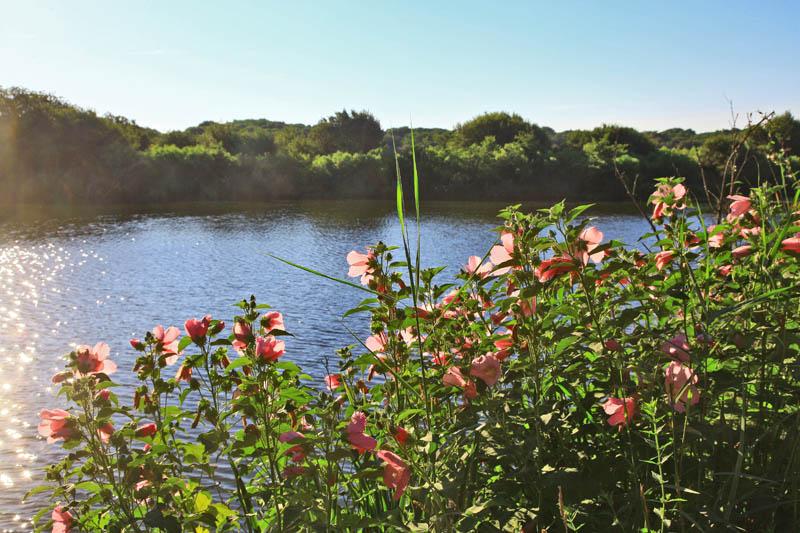 Balade à pied autour de l'étang de Moïsan à Messanges