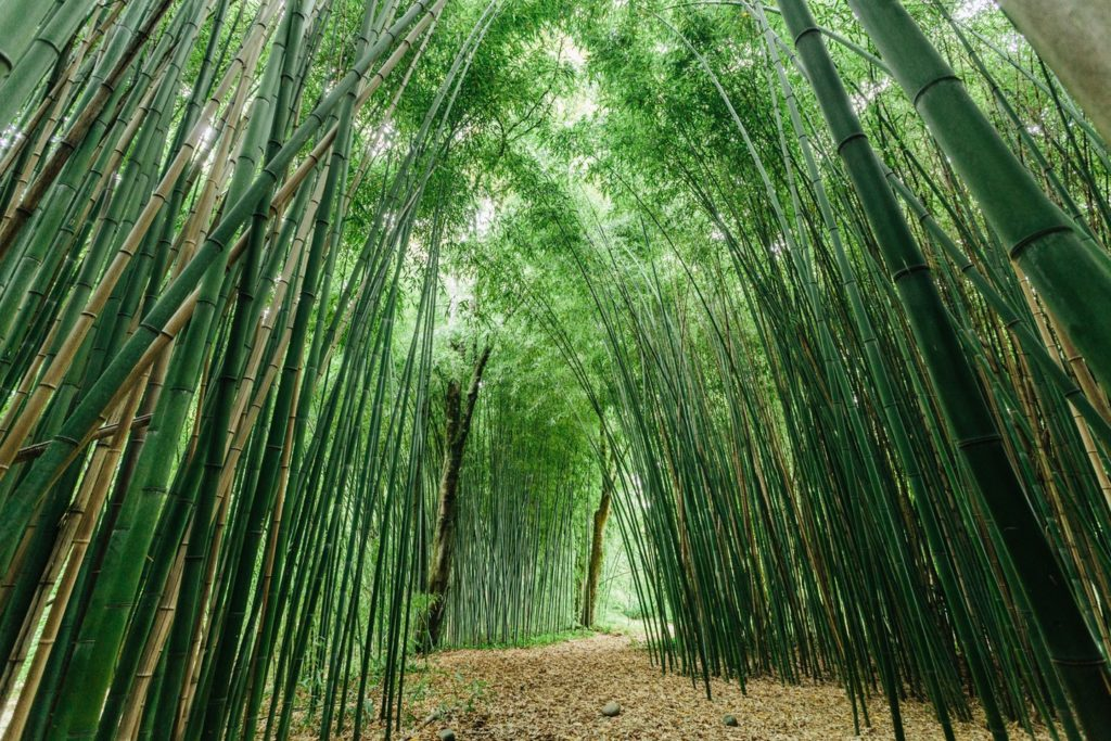 bambouseraie-4